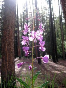 IMG_5519 flower campsite