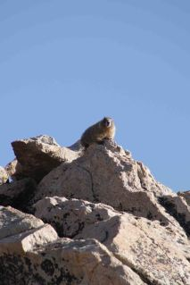 IMG_5568 marmot