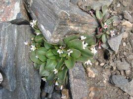 IMG_5622 flower