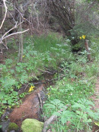 IMG_5684 creek