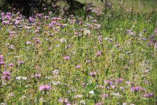 IMG_5700 wildflowers