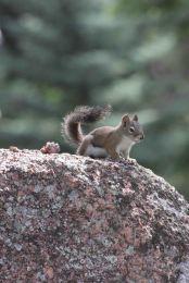 IMG_5704 squirrel