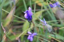 IMG_5724 flower