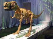 IMG_6009 dinosaur