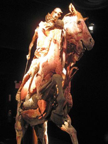 IMG_6023 man horse