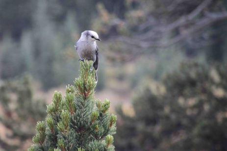 IMG_6403 bird