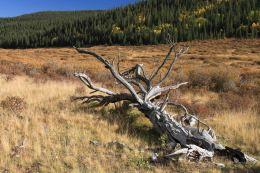 IMG_6425 tree