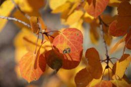 IMG_6430 leaves