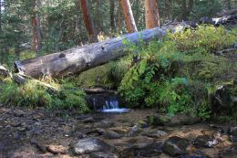 IMG_6467 creek