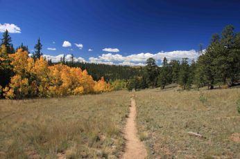 IMG_6493 trail