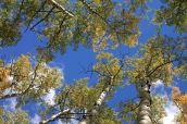 IMG_6556 treetops