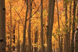IMG_6570 aspen grove