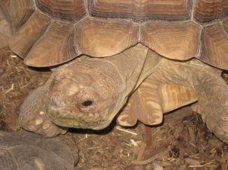IMG_6196 tortoise