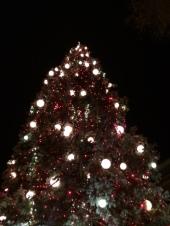 tree at the broadmoor