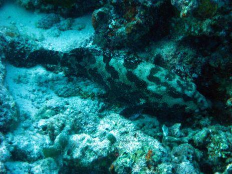 IMG_0202 grouper