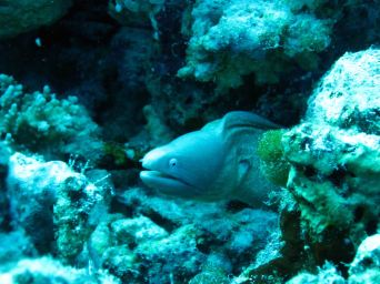 IMG_0222 white eyed eel