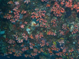 img_0251 coral