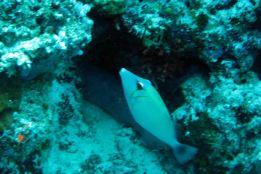 IMG_0253 filefish