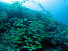 photo1430311046205 fish dive 1