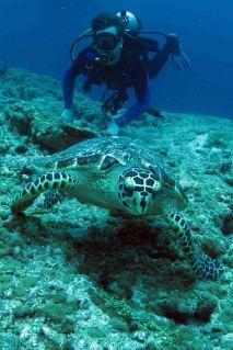 photo1430311050902 dustin turtle dive 1