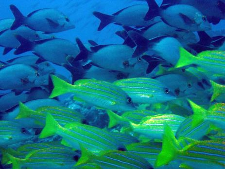 photo1430313180977 fish