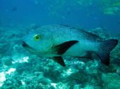 photo1430313413022 fish