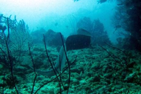 free swimming eel