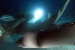 photo1430315574439 sharks