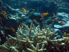 photo1430928204716 coral