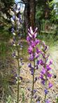 20150702_135319 wildflower