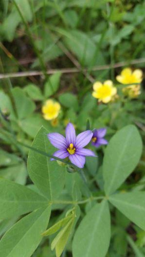 20150702_154211 wildflower