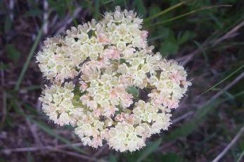 20150711_144250 flower