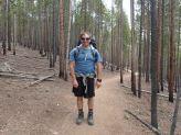 lodge pole pines