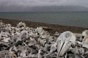 IMG_0064 whale bones adventuresofacouchsurfer