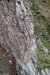 IMG_0121 bird cliff adventuresofacouchsurfer