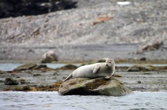 IMG_0258 seal adventuresofacouchsurfer