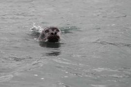 IMG_0264 seal adventuresofacouchsurfer
