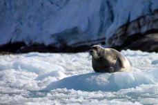 IMG_8584 seal adventuresofacouchsurfer