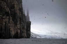 IMG_8648_bird cliff adventuresofacouchsurfer