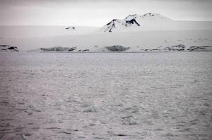 IMG_8801 3 polar bears