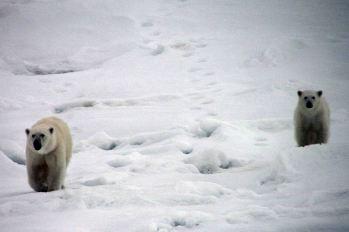 IMG_8844 polar bears adventuresofacouchsurfer