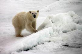 IMG_8855 polar bear adventuresofacouchsurfer