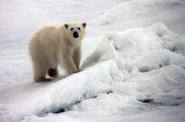 IMG_8856 polar bear adventuresofacouchsurfer