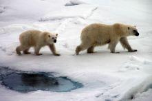 IMG_8872 polar bears adventuresofacouchsurfer