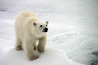 IMG_8897 polar bear adventuresofacouchsurfer
