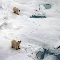 IMG_8906 polar bears adventuresofacouchsurfer