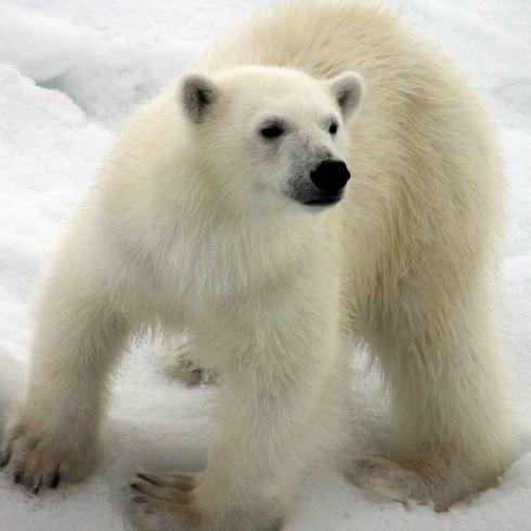 IMG_8916 bear cub adventuresofacouchsurfer