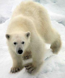 IMG_8918 bear cub adventuresofacouchsurfer