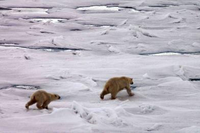 IMG_8926 polar bears adventuresofacouchsurfer