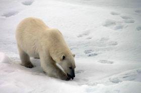 IMG_9005 polar bear adventuresofacouchsurfer